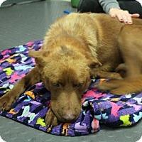 Adopt A Pet :: Chandler - Whitestone, NY