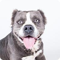 Adopt A Pet :: Bevin - Adrian, MI