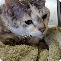 Adopt A Pet :: Beatrix - Monterey, VA