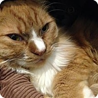 Adopt A Pet :: Leo - Lincoln, CA