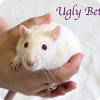 Adopt A Pet :: Ugly Betty - Bradenton, FL