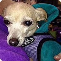 Adopt A Pet :: Lita - Vacaville, CA