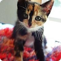 Adopt A Pet :: Kaleidoscope - N. Billerica, MA