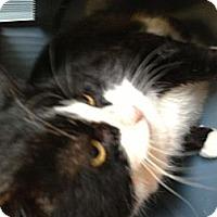 Adopt A Pet :: Sweetie - N. Berwick, ME