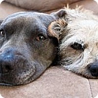 Adopt A Pet :: Rico & Bailey - Santa Monica, CA