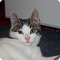 Adopt A Pet :: Edison (LE) - Little Falls, NJ