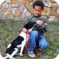 Adopt A Pet :: LYNDA - Brooksville, FL
