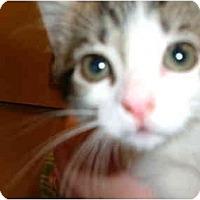 Adopt A Pet :: KITTENS - No.Charleston, SC