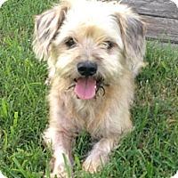 Adopt A Pet :: Renly - Houston, TX