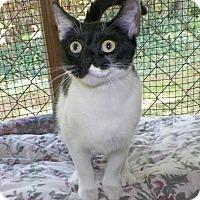 Adopt A Pet :: Jasmine - Dover, OH