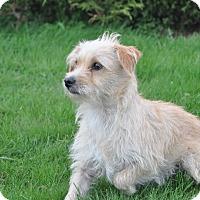 Adopt A Pet :: Eddie - Tumwater, WA
