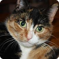 Adopt A Pet :: Mackey (LE) - Little Falls, NJ