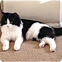 Adopt A Pet :: Lynn - Colorado Springs, CO