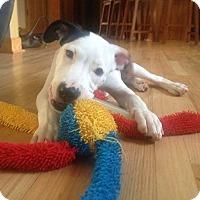 Adopt A Pet :: Benny - West Allis, WI