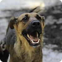 Adopt A Pet :: Etta - Alpharetta, GA