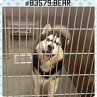 Adopt A Pet :: Bear - Zanesville, OH