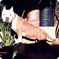 Adopt A Pet :: Pink - Hermosa, CA