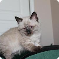 Adopt A Pet :: Corinna - Austin, TX