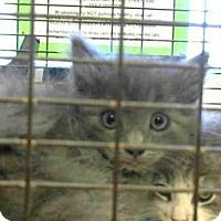 Adopt A Pet :: *MIKE - Sacramento, CA