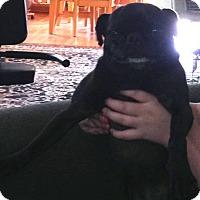 Adopt A Pet :: Lilly - Strasburg, CO