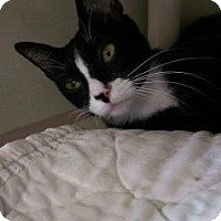 Adopt A Pet :: Raven - Fort Collins, CO