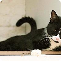 Adopt A Pet :: James - New York, NY