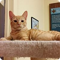 Adopt A Pet :: Kristoff - Phoenix, AZ
