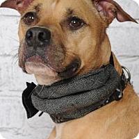 Terrier (Unknown Type, Medium) Mix Dog for adoption in Titusville, Florida - Tank