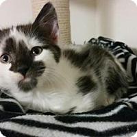 Adopt A Pet :: Thursten - Princeton, MN