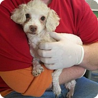 Adopt A Pet :: Tom - Picayune, MS
