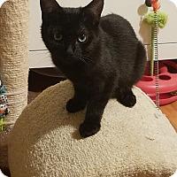 Adopt A Pet :: Ali - El Cajon, CA
