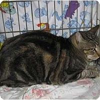 Adopt A Pet :: Joey - Los Alamitos, CA