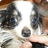 Adopt A Pet :: Binkey - Chandlersville, OH