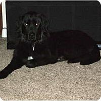 Adopt A Pet :: Tiny- Adoption Pending - Lee's Summit, MO