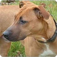 Adopt A Pet :: Tyson - Rigaud, QC
