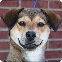 Adopt A Pet :: Meghan - kennebunkport, ME