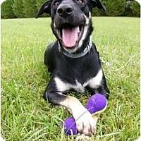 Adopt A Pet :: Ripley - Mocksville, NC