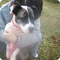 Adopt A Pet :: Mary Jane - North, VA