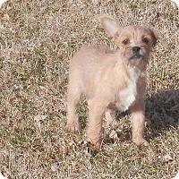 Adopt A Pet :: Nina - Clarksville, TN