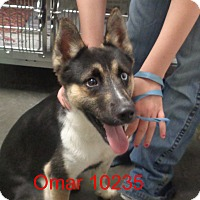 Adopt A Pet :: Omar - baltimore, MD