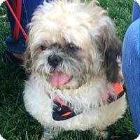Adopt A Pet :: Eli - North Ogden, UT