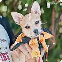 Adopt A Pet :: Foxy - Kingwood, TX