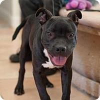 Adopt A Pet :: Darryl - Sacramento, CA