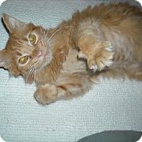 Adopt A Pet :: Bentley-Sweet Survivor - Arlington, VA