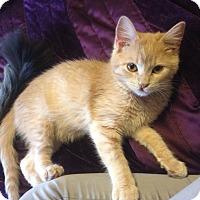 Adopt A Pet :: Signy - St. Louis, MO