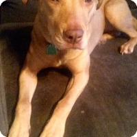 Adopt A Pet :: Lucy - Olive Branch, MS