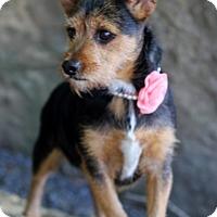 Adopt A Pet :: Meredith - Dalton, GA