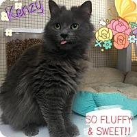 Adopt A Pet :: Kenzy - Hampton, VA
