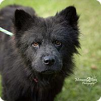 Adopt A Pet :: Belle - Daleville, AL