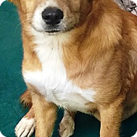 Adopt A Pet :: Buttercup - Oswego, IL